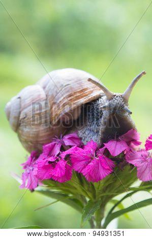 Snail on flower in summer garden