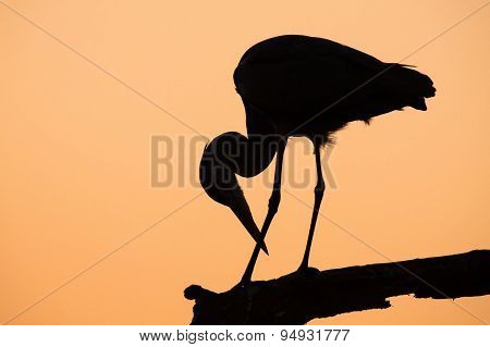 Heron Silhouette In The Early Morning On Branch