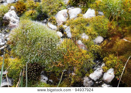 White rock tiny stones shot with different types of green damp moss