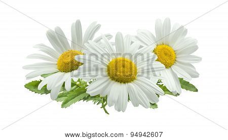 3 Chamomile Composition Isolated On White Background