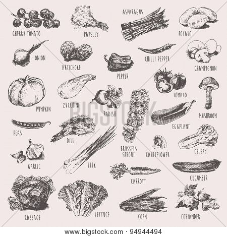 Set of hand drawn vegetables high detailed sketch
