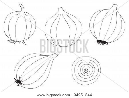 Delightful garden - Set of five onions