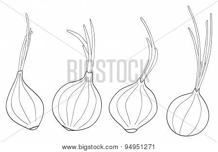 Delightful garden - Set of four onions