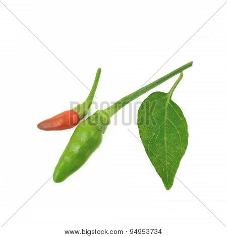 Fresh (bird's Eye Chilli Pepper) With Leaves Isolate On White