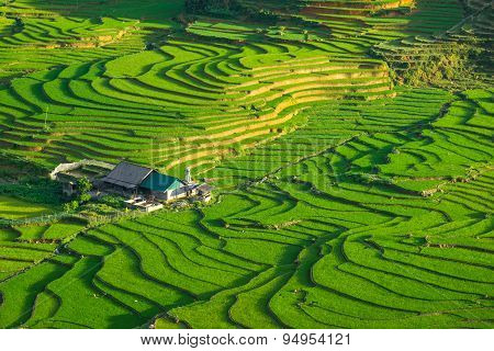 Rice fields on terraced in rainny season at SAPA, Lao Cai, Vietnam.