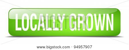 Locally Grown Green Square 3D Realistic Isolated Web Button