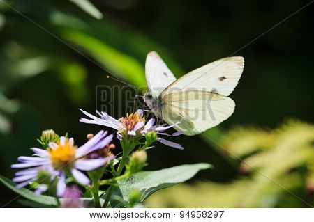 Butterfly and flower in summer nature