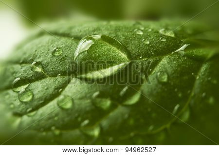 Drops Of Water On Green Leaf