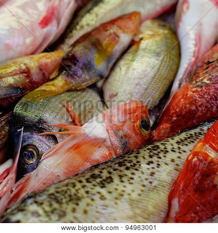 Raw Fish Background