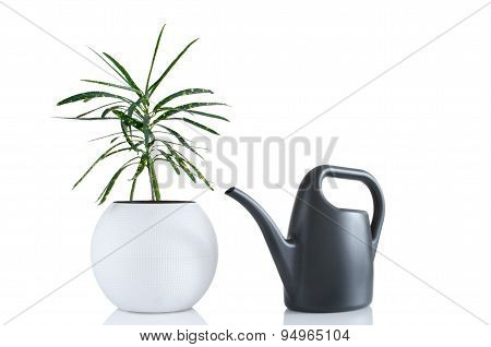 Houseplant And Watering Can