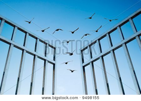 Birds Fly Over The Open Gate
