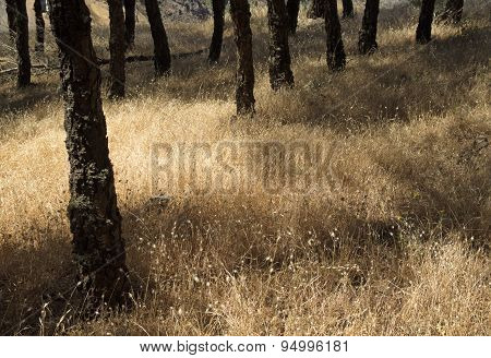 Natural Floral Background With Dry Grasses