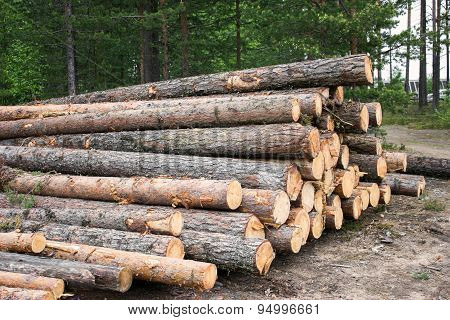 Raw Materials For Lumber