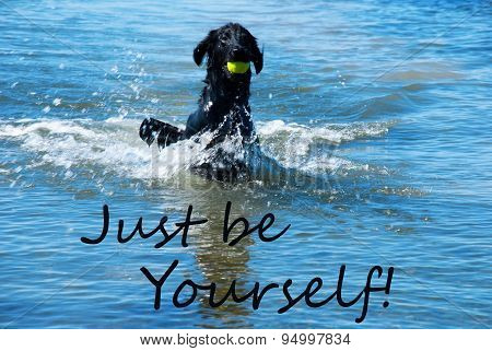 Dog Play With Ball In Water Quote Just Be Yourself