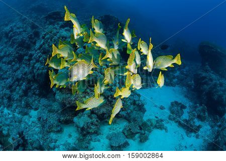 Coral Life Diving Sudan Soudan Red Sea Safari