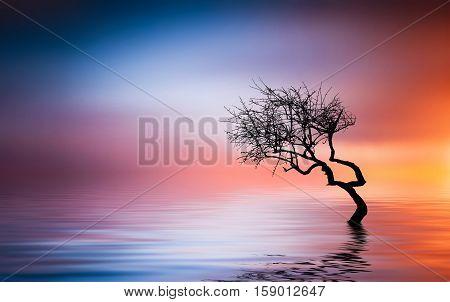Tree at lake. Beautiful landcape summer. sunset