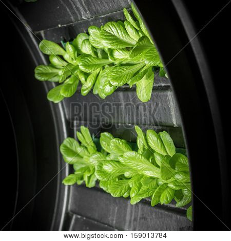 Planting hydroponics system at indoor. Shallow depth of field.