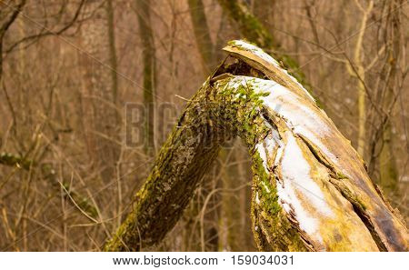 winter in the forest is beautiful and fresh you can find a lot of interesting