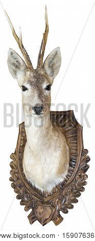 Roe Deer buck hunting trophy Isolated with Clipping Path