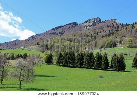 Green Mountains With Mount Spitz In Tonezza Village In Italy