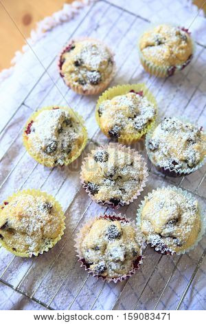 Blueberry muffins just out of the oven sprinkled with powdered sugar