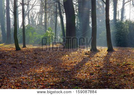 The photo shows the city park in autumn. The trees are devoid of leaves. A thick layer of fallen brown leaves cover the ground. Above the ground rises fog illuminated by the sun.