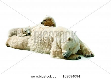 She-bear with cubs sleeping on white background