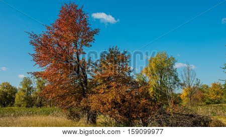 autumn landscape and forest trees sunny day