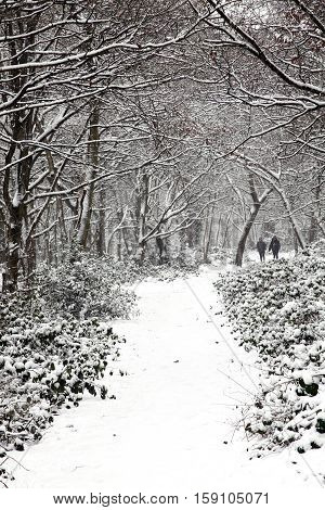 Snow landscape of Wandsworth Common, London, England UK which is popular woodland for family leisure walks