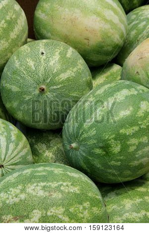 Fresh, whole watermelons set together at local farmers market.