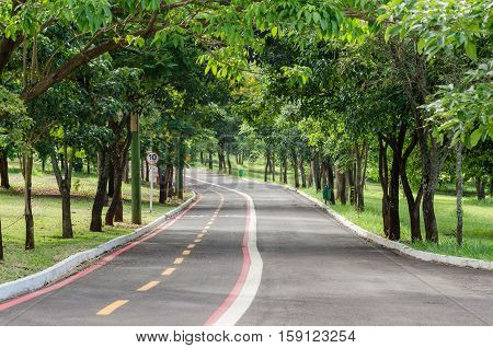 Hiking trail in the middle of nature with large green trees very relaxing and quiet place for a morning walk.