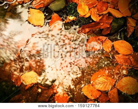 Fallen Beech Leaves And Stones In Water Of Mountain River, First Leaves