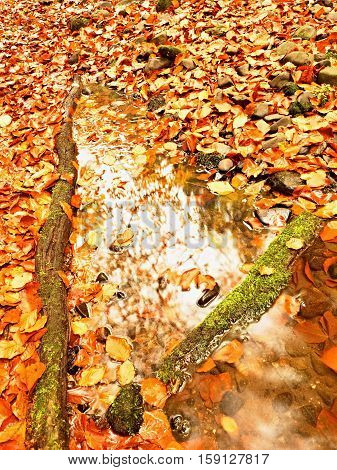Natural Mirror In Orange Frame. Fallen Beech Leaves  In Water Of Mountain River
