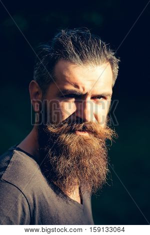 Frown bearded man with beard moustache and gray hair stylish hipster male outdoors on sunny summer day on natural background