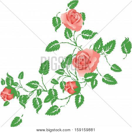 Scalable vectorial image representing a floral element with vintage roses, isolated on white.