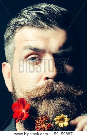 Frown bearded man with gray moustache and hair stylish hipster male with fresh flowers in beard on dark background