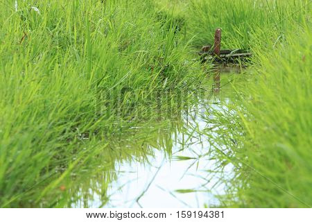 Grass and little stream in afternoon light