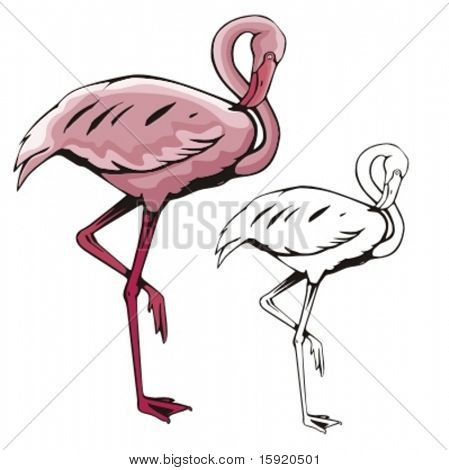 Vector illustration of a flamingo.