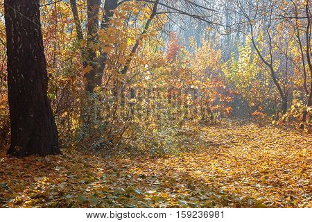 Autumn Forest frosty sunny morning. Landscape. Nature.
