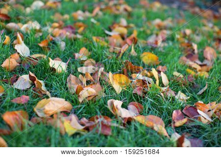 Colorful Autumn Leaves On The Ground