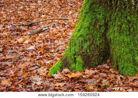 Tree Trunk Covered By Green Moss