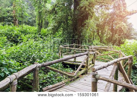 Old wooden walkway in forest with sunlight at Chiang mai Thailand.