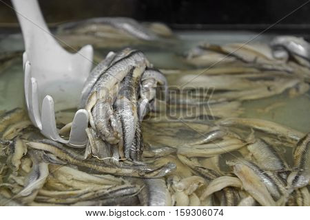 Marinated Anchovy Fish In Pickle Brine