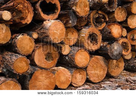 A stack of logs larch, harvested for firewood