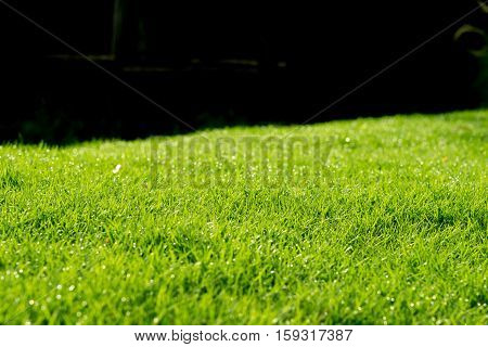 Raindrops on the beautiful green grass background.