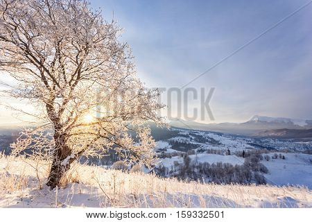 Winter landscape with lots of snow and trees covered with snow