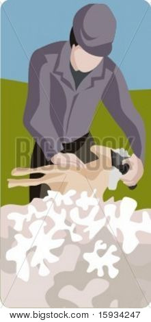 Vector profession series. Sheep shearing. Check my portfolio for much more of this series as well as thousands of similar and other great vector items.
