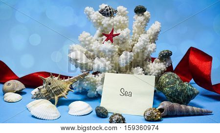 Coral And Shells On A Blue Background, Words On Paper
