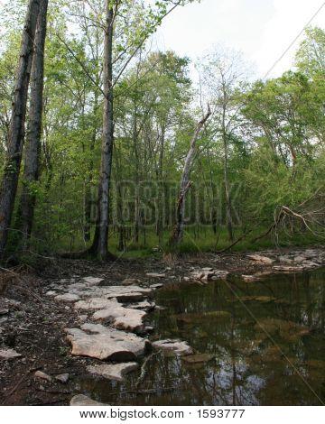 Muddy Swamp
