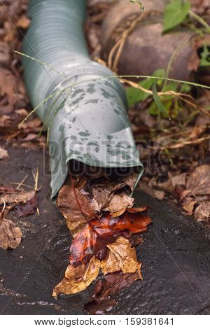 Close up of a rain gutter spout clogged with colorful autumn leaves